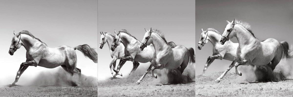 Set 3 canvas 25×25 horses