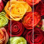 Set 3 canvas 30×60 roses