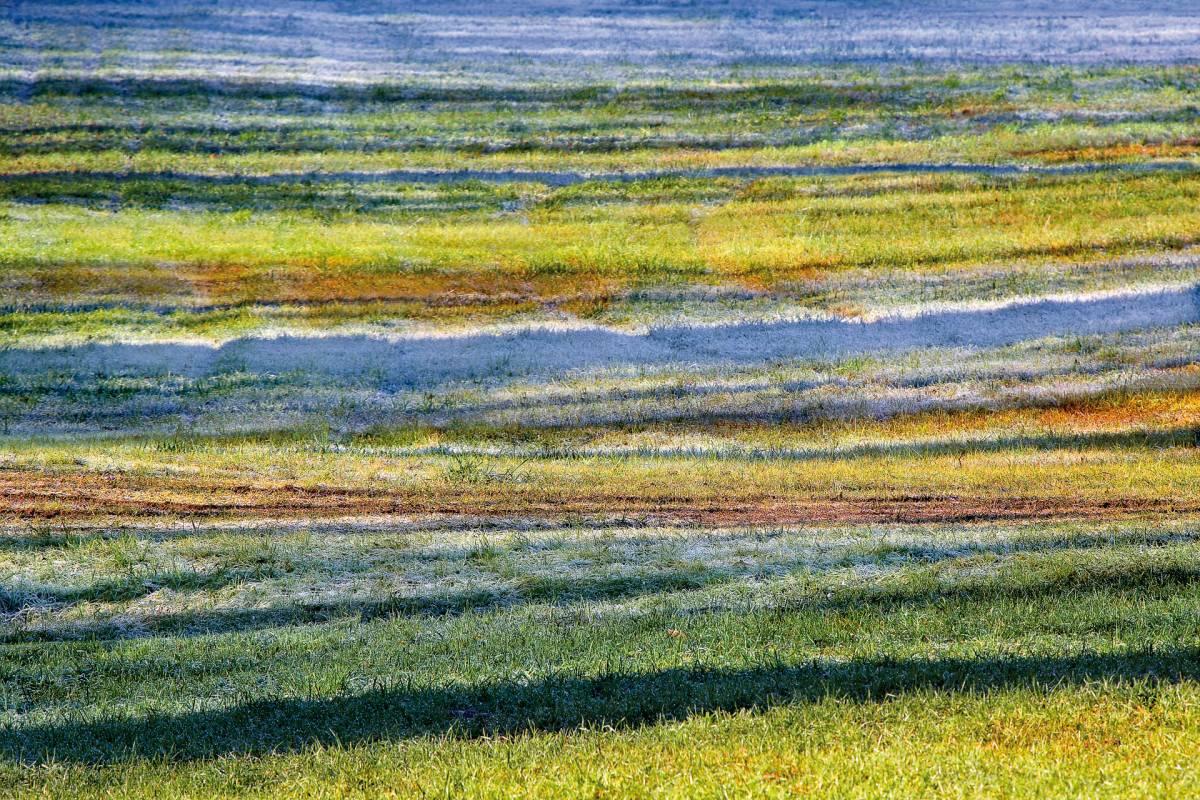 Glossy/fg02 100×150 crazy meadow