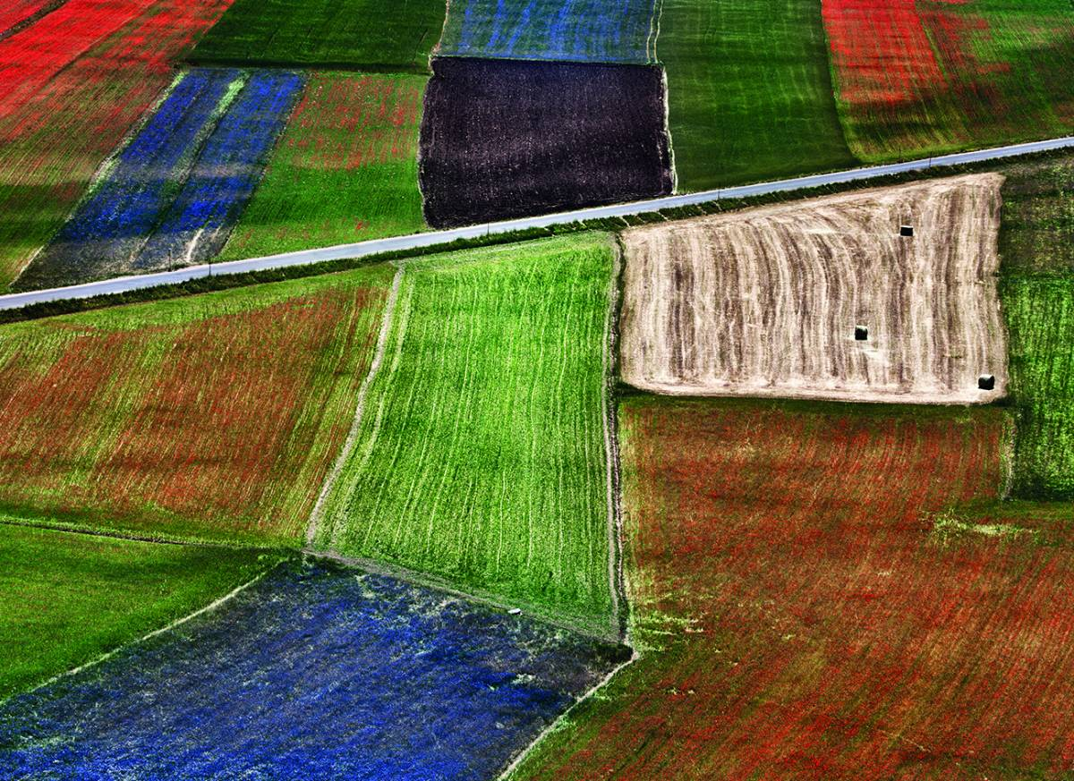 Canvas 0283 80×110 coloured fields