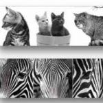 Set 3 canvas/d animals 25×25