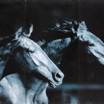 Set 3 canvas 30×60 two horses