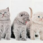 Set 3 canvas 30×60 three cats