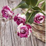 Set 3 canvas 25×25 pink roses