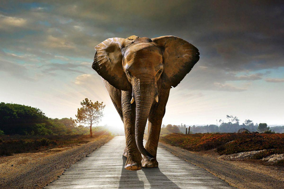 Set 3 canvas 30×60 elephant