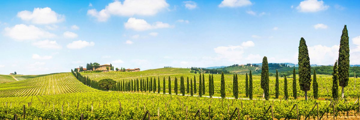 Canvas 50×150 tuscany view