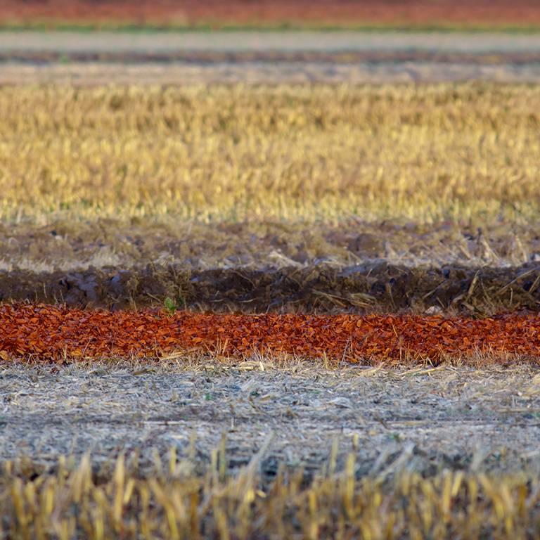 Glossy/fg01 100×100 spicy field