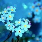 Canvas 0216 40×40 blue flowers