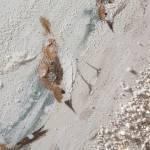 Dipinto art. w675 65×150