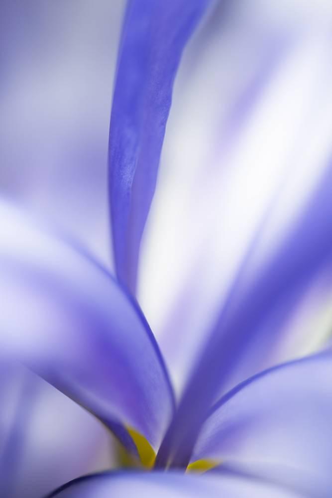 Glossy/aa03 100×150 blue iris